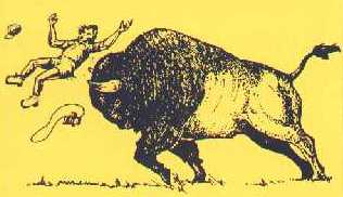Bison don't make good pets..